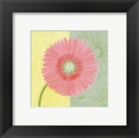 Pink Daisy Framed Print