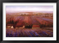 Sense Of Lavender Framed Print