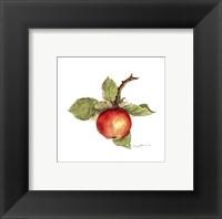 Framed Apple