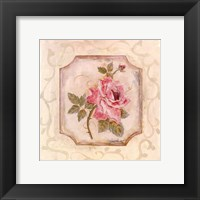 Rose In Season ll Framed Print