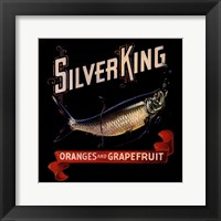 Silver King Framed Print