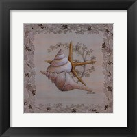 Framed Pastel Shell II