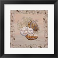 Framed Pastel Shell IV