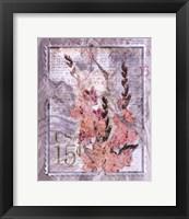 Love Letter Gladioli Framed Print
