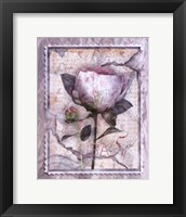 Love Letter Peonies Framed Print