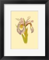 Framed Iris Bloom I