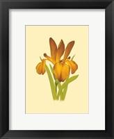 Framed Iris Bloom II