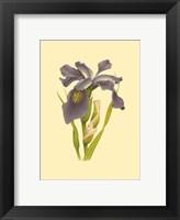 Framed Iris Bloom V