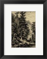 Framed Noble Fir
