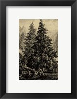 Framed Spruce Pine
