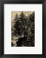 Framed Larch Tree