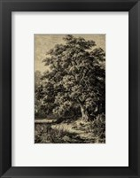Framed Oak Tree