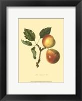 Longland Pear Framed Print