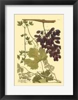 Framed Grapes I