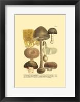 Framed Mushrooms II