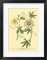 Framed Passion Flower I