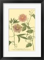 Framed Passion Flower II