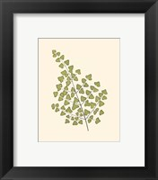 Framed Woodland Ferns II