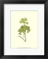 Framed Woodland Ferns III
