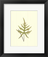 Framed Woodland Ferns IV