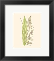 Woodland Ferns V Framed Print