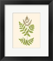 Woodland Ferns VII Framed Print