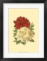 Framed Blooming Azalea II