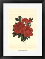 Framed Blooming Azalea III