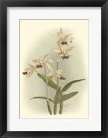 Framed Orchid Garden I