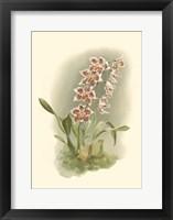 Framed Orchid Garden II