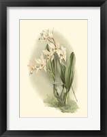 Framed Orchid Garden III