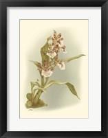 Framed Orchid Garden IV