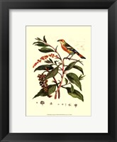 Framed Bird In Nature I