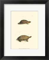 Framed Antique Turtles I