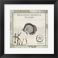 Framed Biologia Marina I