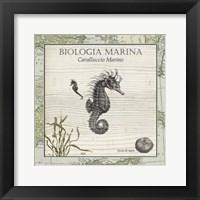 Framed Biologia Marina III