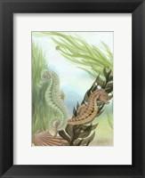 Framed Seahorse Serenade IV
