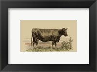 Framed Antique Cow II
