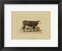 Framed Antique Cow IV