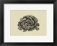 Coral On Khaki I Framed Print