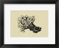 Coral On Khaki II Framed Print