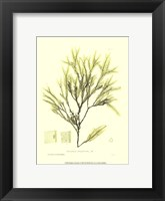 Framed Seaweed I