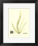 Framed Seaweed II