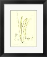 Framed Seaweed III