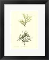 Framed Seaweed IV