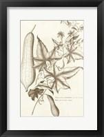 Framed Sepia Buchoz Exotics IV