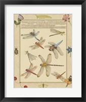 Framed Dragonfly Manuscript IV