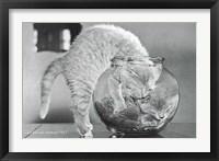 Framed Le Bol Du Chaton 1957