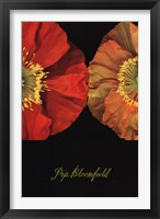 Framed Red And Yellow Poppy I
