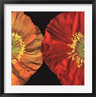 Framed Red And Yellow Poppy II